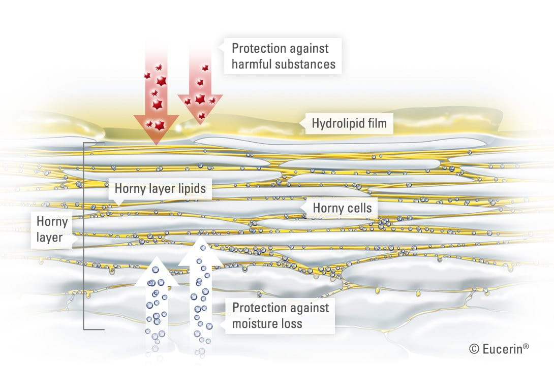 Understanding Skin Structure And Function Eucerin