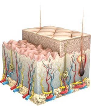 Graphic illustration of skin and its layers.