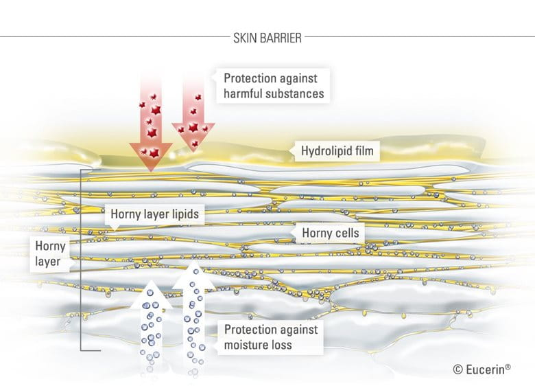 Graphic illustration of skin and its horny layer.